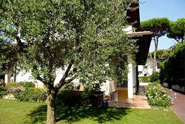 Foto Villa Rif.AF075 in affitto-stagionale situato a Forte dei Marmi